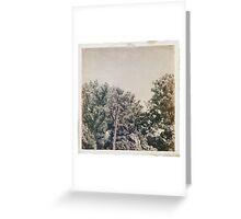 LoMo Trees Greeting Card