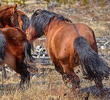 Stallions gone crazy! by JamesA1