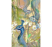 Peacock Garden 2  Photographic Print