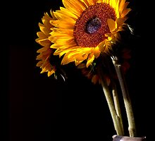 Sunflower Still life by mattdspics