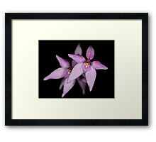 Pink Fairy Orchids Framed Print