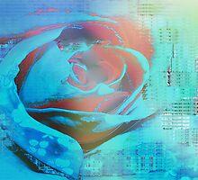 Peach rose highlighted in blue by ?? B. Randi Bailey