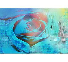 Peach rose highlighted in blue Photographic Print
