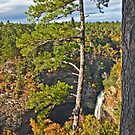 Pines and Waterfall by Lisa G. Putman