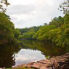 Summer Green of Davies Bridge by Lisa G. Putman