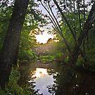 Summer Morning at Davies Bridge by Lisa G. Putman