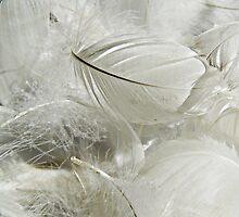 Fluff  by Alexandra Lavizzari