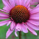 Vibrant Flowers by jessicadyer