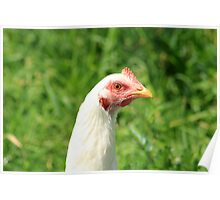 Head of a Chicken Poster