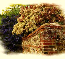 Beautiful Bushes by Neville Hawkins