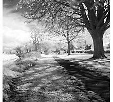Mark near Highbride Photographic Print