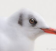 ..high key Seagull..  by John44