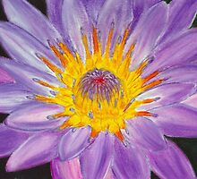 Purple Water Lily Pastel by AngelaBishop