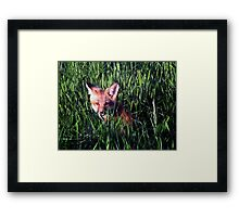 Fox in the Grass Framed Print