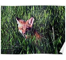 Fox in the Grass Poster