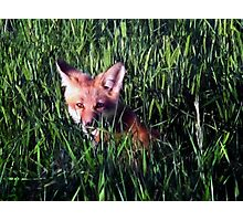 Fox in the Grass Photographic Print