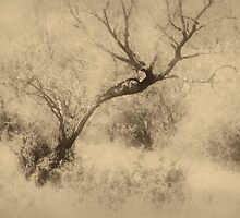 Sepia landscape with trees by fodorpetya