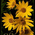 Thinking of You  (Prairie Sunflower) by Victoria Jostes
