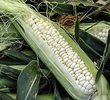 Fresh White Corn by Rebecca Dru