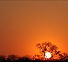 A TYPICAL AFRICAN BUSHVELD SUNSET by Magriet Meintjes