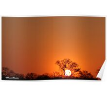 A TYPICAL AFRICAN BUSHVELD SUNSET Poster