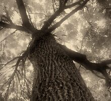Sepia tree 2 by fodorpetya