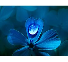Flower Blues Photographic Print
