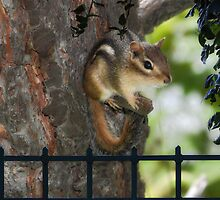 The Chipmunk by Elaine  Manley