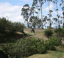 Riding Through an Ecuadorian Pasture by rhamm
