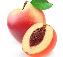 One and a half nectarine peaches by 6hands