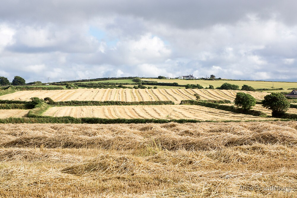 cornwall fields by Anne Scantlebury