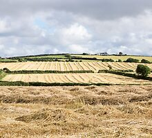 cornwall fields by Anne Scantlebury