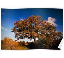 Autumn colours on a tree by the Towpath Poster