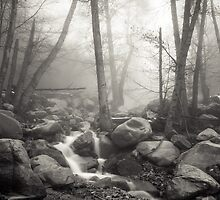 Misty Brook by Jason  Fitzgibbon
