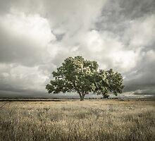 Lone Acacia by Jason  Fitzgibbon