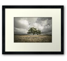 Lone Acacia Framed Print