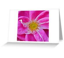 """""""Pink Wild Rose"""" Greeting Card"""