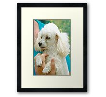 Someone's little darling Framed Print