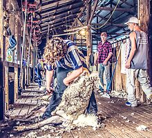 Woolshed Calendar 5 by Candice84