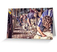 Woolshed Calendar 6 Greeting Card