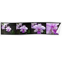 Orchid Panorama from Ubud 01 Poster