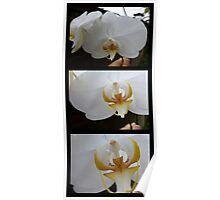 ORCHID PANORAMA FROM UBUD 03 Poster