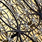 Gold Rings by John Dalkin