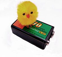 Battery Chick by Neville Hawkins