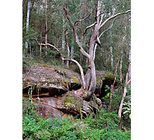 Trees in the Valley Photographic Print