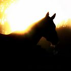 a horse in the sun rise by lilli robertson