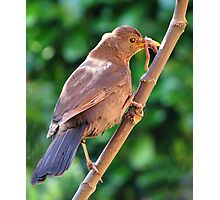 The Early Bird Photographic Print