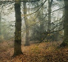 Autumn Woods by Sarah Jarrett