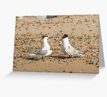 Sandwich Terns Greeting Card