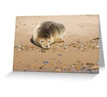 Seal Snoozing on Blakeney Point Greeting Card
